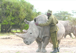 Award-Winning Documentary and Q&A about last male white rhino to screen in Shelby